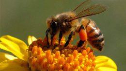 api-toronto